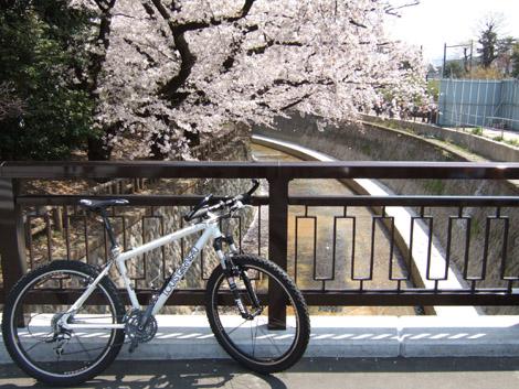 hanami_nakano03
