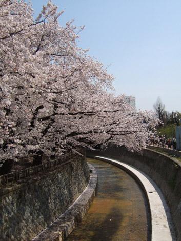 hanami_nakano04